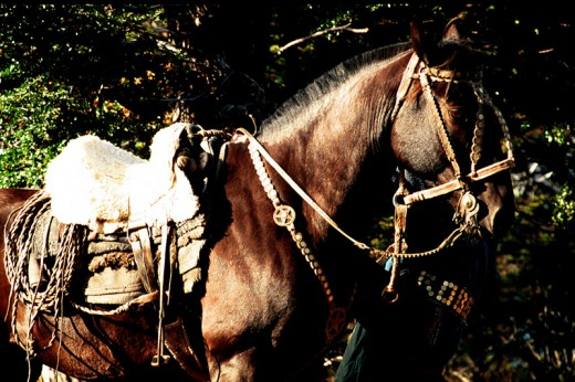 Criollos are the original stock horses of Patagonia