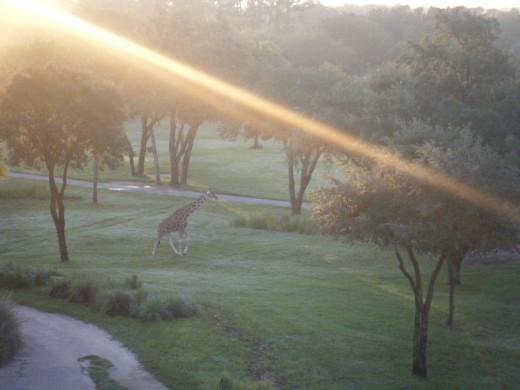 Sunrise over the savanna
