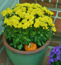 Recycling Ideas for Fall Container Gardens