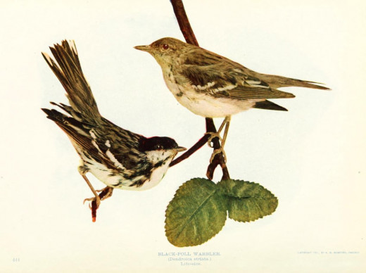 Birds and nature in natural colours {1913-14}
