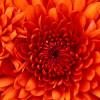 OliviaCarter profile image