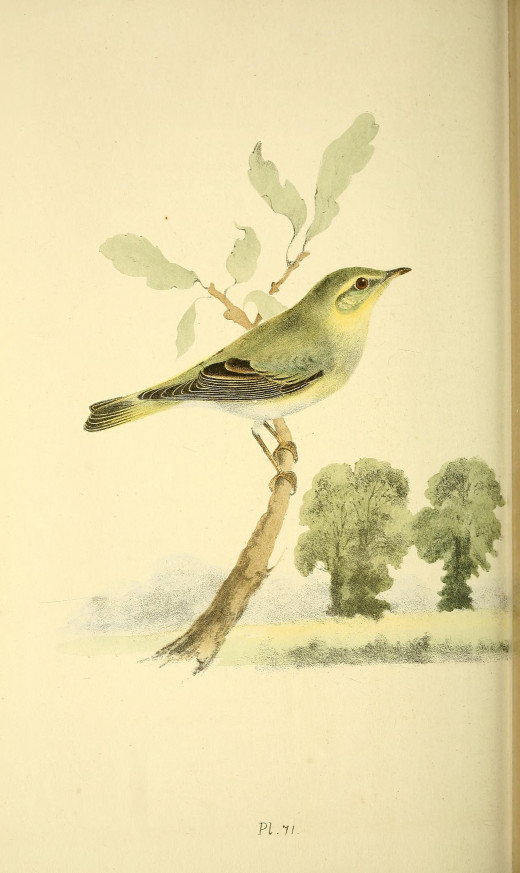 Meyer { 1842 1850}