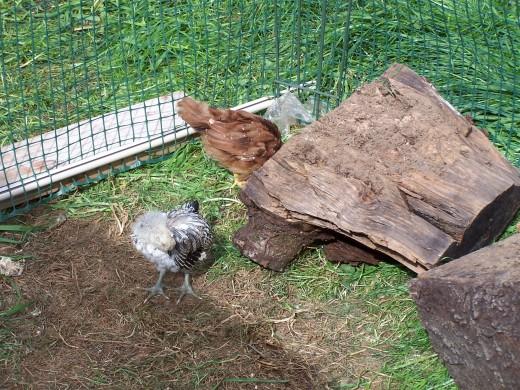 Getting bigger....Regalia and Minerva