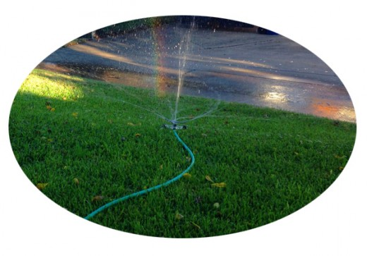 My morning sprinkler caught a ray of early sunlight and made a little rainbow!