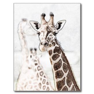 A giraffe sketch on a postcard in my Zazzle store.