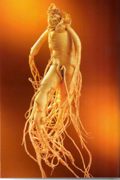Ginseng Benefits: Ten Reasons to Eat More Ginseng
