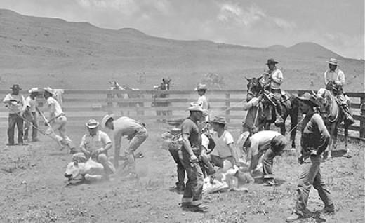 Hawaiian Paniolo (cowboys)