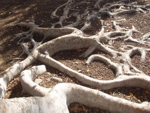 The roots detain water enough to let it soak in, and also provide tunnels for it to soak deep into the soil.