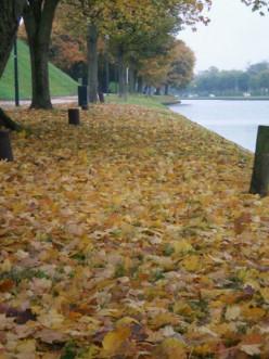 The colours of autumn © A Harrison