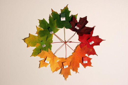 Autumn leaves some in a wide variety of colours and can be used as decorations and in craft projects.