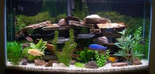 decorating your fish tank dos and don 39 ts