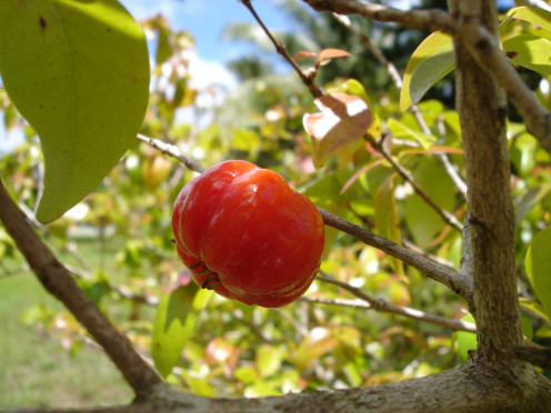 Tart cherry juice is particularly helpful for arthritis