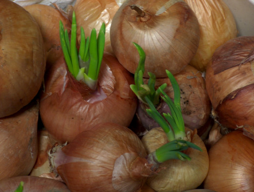 Onions are extremely versatile, just chew a few sprigs of parsley after eating to avoid the dreaded onion breath.