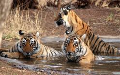 10 Best Wildlife Sanctuaries in India