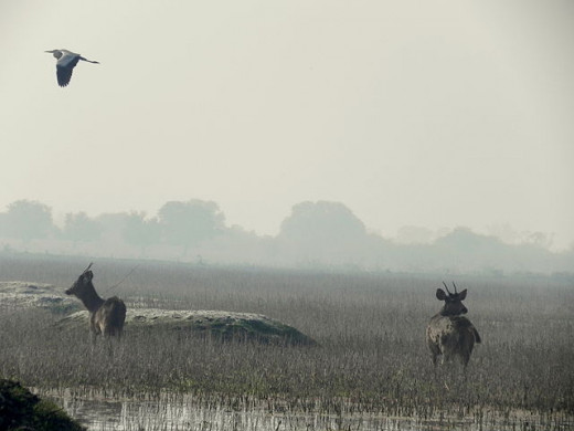 The wetlands of Bharatpur Bird Sanctuary