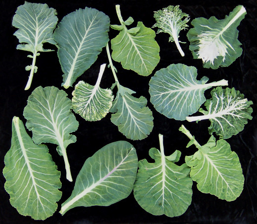 Super-charge a green smoothie with collard greens.