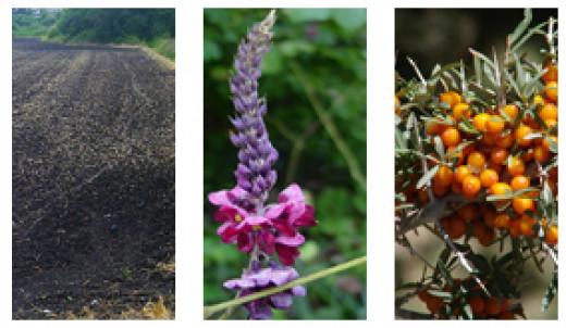 Black Soil, Kudzo, and Seabuckthorn Berries