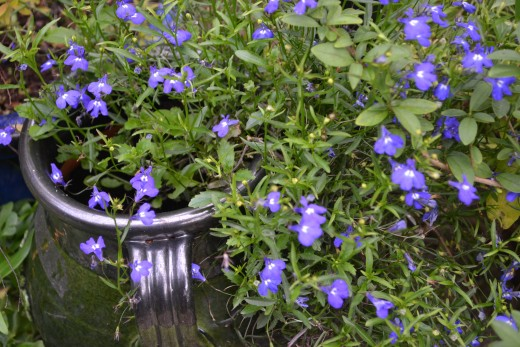 Combat stress by maintaining an active lifestyle such as gardening