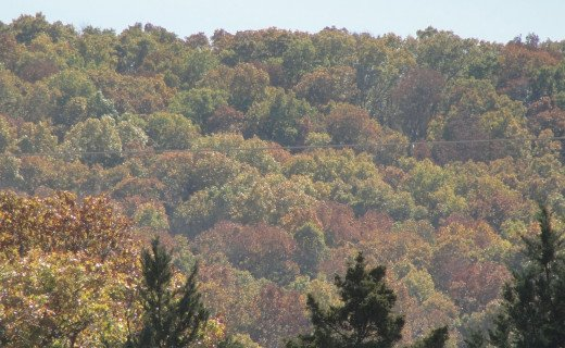 Early Fall Colors in the Ozarks