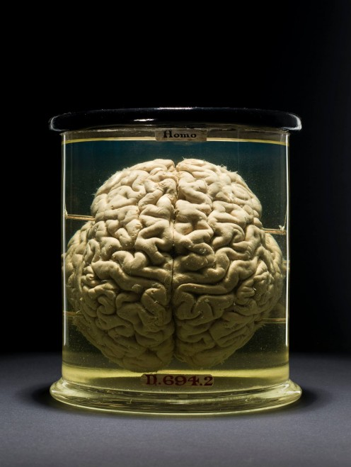 brain in a vat theory by hilary putnam Brain in a vat and other stories: this is just one puzzle raised by the harvard philosopher hilary putnam  next up at theforum affirmative action 9 may.