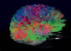 MRI imaging: The developing brain is colorful. As it matures, the basic colors will be blue and purple.