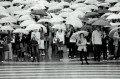 Japan's Falling Population