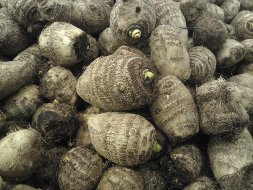 Taro corms