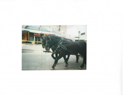 carriage horses in Halifax
