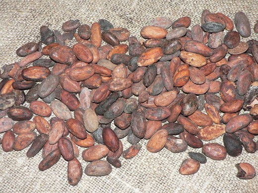 Cocoa beans derived from the cocoa tree. Similar to almonds?