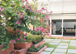 How to make terrace garden-A simple guide