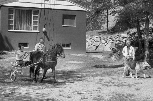 My grandfather is standing by the horse and cart.  My grandmother's father is standing by Duke, the dog.