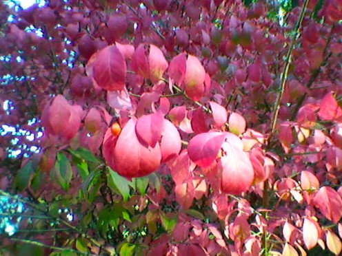 """""""The name of it is Autumn, the hue of it is blood.""""  ~ Emily Dickenson - The Name of it is Autumn"""