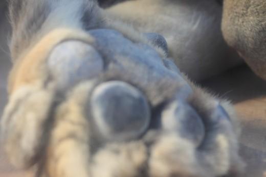 "Bora's ""little"" paws!"