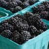 Best Fresh Fruit Recipes: Blackberries, Apples and Grapes