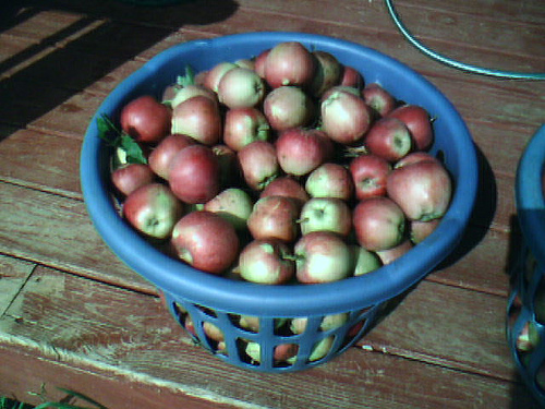 Wash apples thoroughly to remove any dirt before beginning the processing. Make certain that all bad spots and insect damage (including harbored insects) is removed.