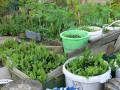 Best Tips For New Organic Gardeners - Easy Gardening Ideas