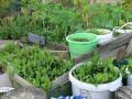 Best Tips For New Organic Gardeners - Easy Gardening Ideas