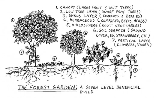 Permaculture principles of vertical layers can be used in an organic garden.