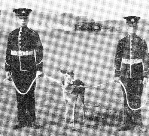 Privates of the 2nd Royal Warwickshire Regiment with one of their two pet antelopes of the battalion.