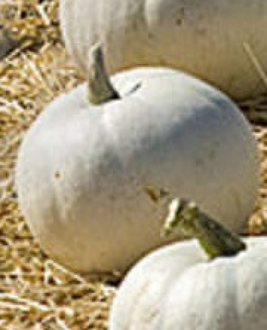 White pumpkins are not so rare anymore and provide the perfect natural background for a bold design