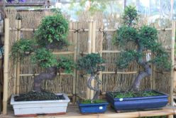 For example:  If your business is Wholesale Bonsai, your target is Retail Bonsai and the way to capture the mind share of your business niche' would be to ensure your website includes the best quality content about everything Bonsai care!