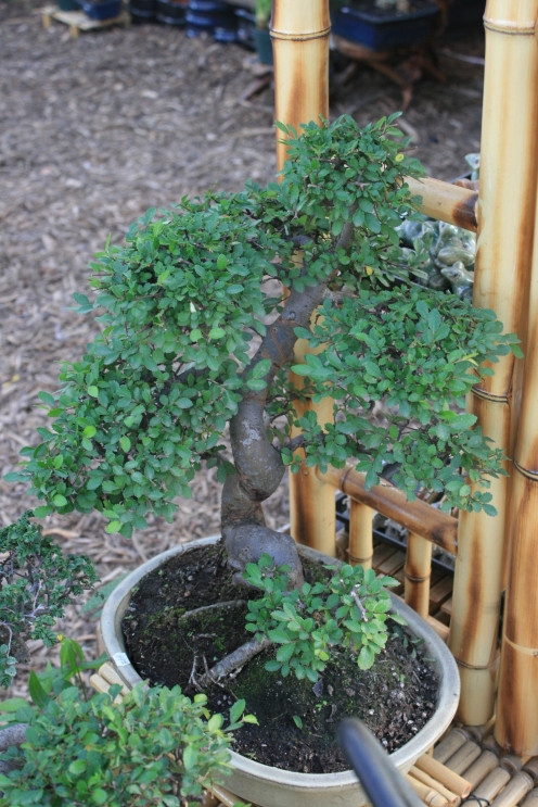 As your Target audience searches for Bonsai related information on sales, better care methodologies and locations for healthy wholesale plants, for example, they find your website in their search on Bing, Yahoo and Google, they click on YOUR site!