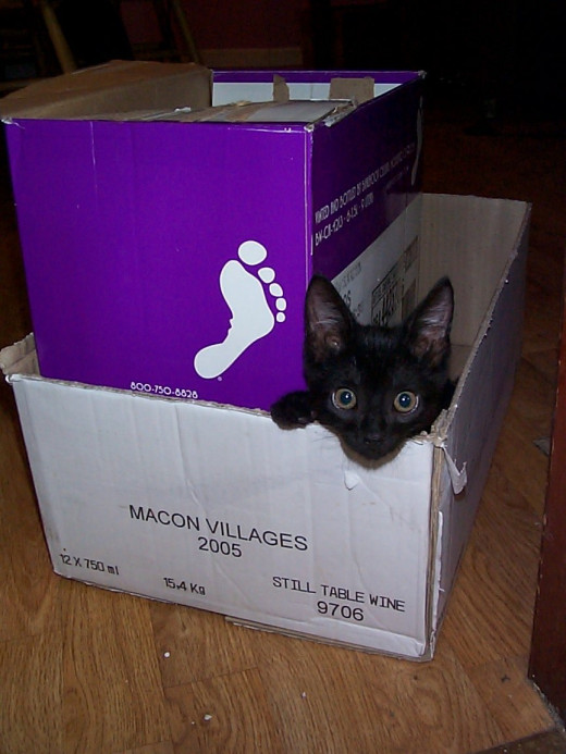 Too cute kitten Byron in wine box.