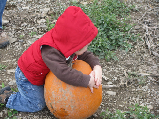 What says Autumn more than picking a pumpkin?