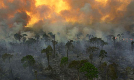 Destruction of the rainforest.