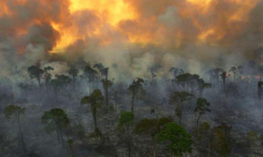 Destruction of the rainforest.