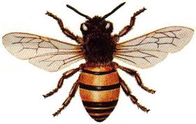 Bees have a very fuzzy looking front part which makes them look adorable.