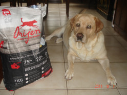 Lola, My Golden Lab gets a variety diet of the best dog food, including Orijen, Homemade, and Dehydrated/Freeze Dried Food.