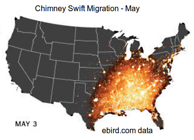 Real Time tracking of Bird Migration using data from bird watchers for the  Chimney swift in U.S.A.