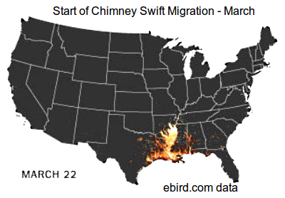 Real Time tracking of Bird Migration (Chimney swift) using crowdsource data from dedicated bird watchers